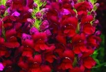 ✿ Red and pink garden ✿ / Flowers and plants for a garden in pink and red colors.