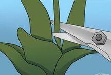 formas de podar orquídeas