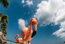 állatok flamingo