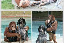 scimmia con cane