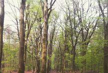 Mooi Montferland / Montferlandse bossen en omgeving