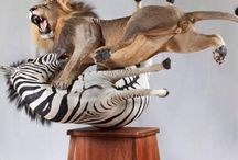 Incredible Taxidermy