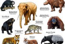 Zwierzęce rodziny całego świata