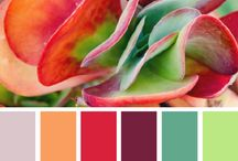 Color palettes / by Jacquelynn White