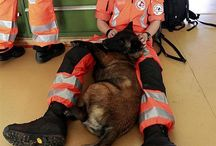 police and rescue dogs
