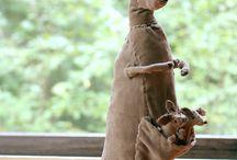 мягкая игрушка кенгуру,жирафы