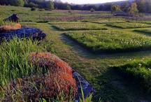 Meadows & Paths
