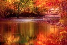 Colors of Autumn / by Joyce Aleshire