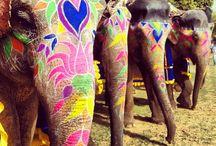 Elefante Indio