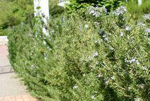 easy maintain plants