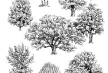 ağaç ve hayvan çizimleri