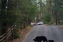 Ruidoso, New Mexico / All things Ruidoso, a beautiful mountain community in Southeastern New Mexico