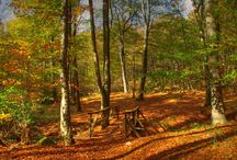 Pilis mountains / One of the most energetic landscape of the Earth is our home