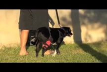 ACL Cruciate Tear for Dogs / by Woundwear Woundwear