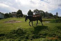 Zwierzęta / piękny koń