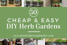 Herbs - using, garden ideas