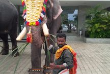 Kerala / God's own country / by Delhi Airport Service Pvt Ltd