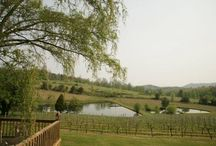 Vineyards & Wineries in Hiawassee and Young Harris / Vineyards and Wineries