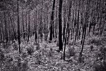 Nature / Black and White
