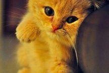 Cutie pies / JEN mom kati