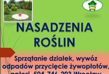 Sadzenie tui, drzew, żywopłotu, cennik, tel 504-746-203, Wrocław, pielęgnacja roślin / Sadzenie tui, cena, tel 504-746-203. Posadzenie żywopłotu, pielęgnacja roślin. Sadzenie drzew. Usługi ogrodnicze, prace ogrodowe. Wrocław i okolice.  Nadolice, Długołęka, Dobrzykowice, Siechnice. Cennik usług do uzgodnienia. http://www.omegaplus.home.pl/ogrodnik-wroclaw/