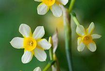 Bulbs and Plants of Wonderment...