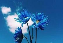 [美的][C] Blue / Aesthetic > Color > Blue