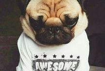 Pug lover