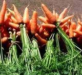 Carrots / by Karen Henry Clark