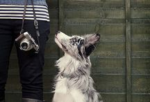 dogs / by Marius Indrei