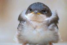鳥 / 鳥