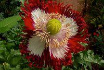 flores naturais exóticas