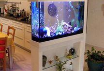 Aquariums ideias