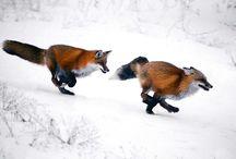 Csodálatos állatok