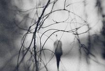 Something Strange / by Aleksey Mikhailichenko