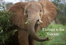 Save The Elephants / #SaveTheElephants