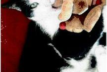 Cat Sitter...i miei nipoti miciosi ❤