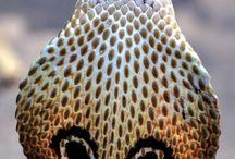 víboras y serpientes / las más impresionantes