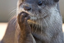 I otta get a board for otters / by Stacy Cruze