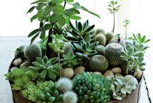 Sweet Home Pflanzen