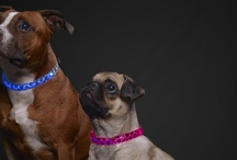 Stylish Paws Products / Stylish Paws has awesome collars, harnesses, leashes, dog jackets, dog beds and many more stylish goodies for your pets!