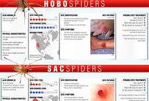 spiders and Insect bites