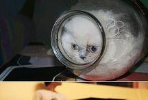 Koťátka