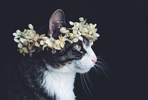 cats in flower crowns