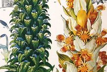 BOTANY ☼ Illustrations
