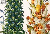 art - botanical and bird  illustrations