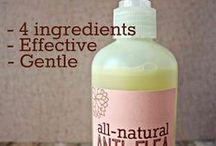 DIY Essential Oil Dog Wash