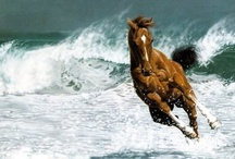 Photos of Horses xxx / This board is about horses and riders