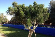 DarZahia's Pool / For swimming DarZahia has a long 105'' lap pool blue majorelle in his garden.