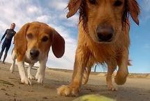 Surf Pups